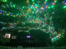 Christmas Lights in our neighbourhood. Copyright Lloyd Marken.